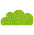 colorful natural bush plant flat design vector image