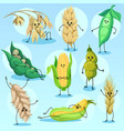 cute wheat barley bean peas and corn characters vector image