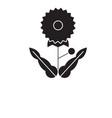 dandelion black concept icon dandelion vector image
