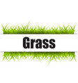 green grass isolated on white background vector image vector image