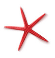 realistic 3d red starfish sea invertebrate vector image vector image