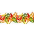 bright colourful rowan berries and leaves autumn vector image vector image