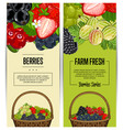 farm fresh berry flyers set vector image vector image