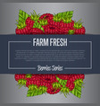 farm fresh berry banner with juicy raspberry vector image vector image