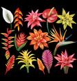 set tropical flowers vector image