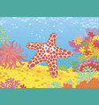 funny starfish on a reef vector image vector image
