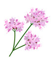pink flowers close up vector image