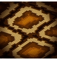 Python snake skin brown background vector image