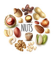 realistic nuts round concept vector image vector image