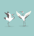 red crowned crane flaps wings cartoon vector image
