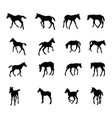 set silhouettes foals vector image vector image