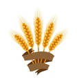 Bunch of wheat barley or rye ears Agricultural vector image vector image