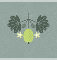 gooseberry leaves flowers shabby vector image