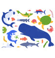 sea animals species ocean animals in their vector image