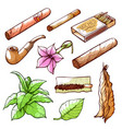 cigars and tobacco smoking hand drawn vector image