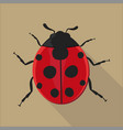 ladybug isolated flat style vector image