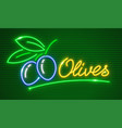 ripe olives on branch vector image