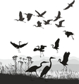 Herons on the shores of Lake vector image