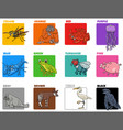 basic colors set with cartoon animal characters