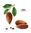 realistic raw cocoa beans with leaf vector image