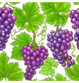 grapes branches pattern on white background vector image