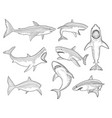 ocean shark big sea fish silhouettes flowing vector image