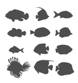 Set of Sea Fish Color Design Flat vector image vector image