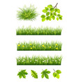 summer grass and leaves collection vector image