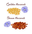 flaxseeds and purple flax flower vector image vector image