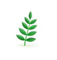 fresh green plant leaf branch isolated on white vector image vector image