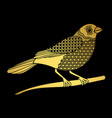 golden bird isolated on black vector image vector image