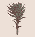 isolated plant on a beige background vector image vector image