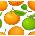 mandarin fruit pattern on white background vector image