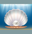 open beautiful seashell with a precious pearl vector image