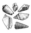 seashells sketch set vector image vector image