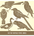 variety of vintage bird vector image