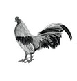 antique rooster vintage hand draw engraving vector image vector image
