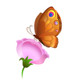 colorful butterfly on flower vector image
