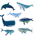 Whales set - hand drawn design vector image vector image