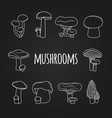 white line mushrooms on blackboard vector image vector image