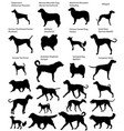 collection of silhouettes of different breeds of vector image vector image