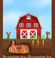 rabbit digging ground at the farm vector image vector image