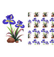 seamless background design with iris flowers on vector image vector image