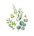 watercolor bouquet with green eucalyptus vector image vector image