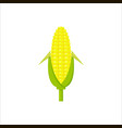 yellow corn in flat style isolated on white vector image vector image