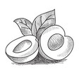 hand drawn peach concept vector image vector image