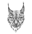 Head of beautiful lynx vector image