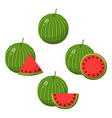 set watermelon fruits isolated on white vector image vector image