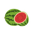 watermelon design vector image vector image
