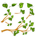 green leaves on branch object vector image